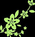 Motif Motif fleuri
