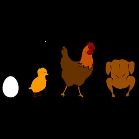 Hähnchen Evolution bunt auf dein T-Shirt