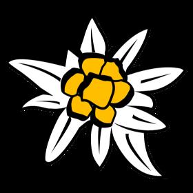 Edelweiss Blüte auf dein T-Shirt