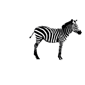 Zebra auf Zebrastreifen auf dein T-Shirt