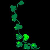 trifoglio irlandese